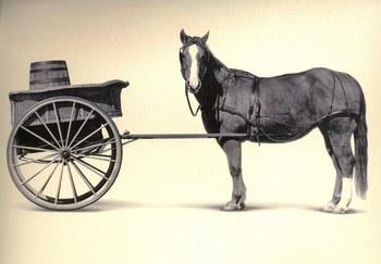 cart_before_the_horse12.jpg